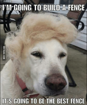 9gag, Best, and Trump: UM GOING TO BUILD A FENCE  IT'S GOING TO BE THE BEST FENCE  VIA 9GAG.COM Trump dog has a plan.
