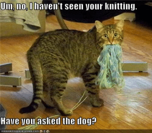 Yarn, Dog, and Com: Um, no, I haven't seen your knitting.  Have you aslked the dog?  ICANHASCHEE2EURGER cOM Yarn? I don't know what you're talking about...