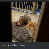 That's a new low, even for you, hooman. Follow @9gagcute - possum: Umm. A little help please. That's a new low, even for you, hooman. Follow @9gagcute - possum