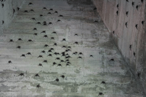 Church, Tumblr, and Blog: unacclimated: bats sleeping in a church tower