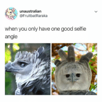 Memes, Selfie, and Good: unaustralian  @FruitbatRaraka  when you only have one good selfie  angle 😂Tag a friend
