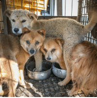 Dogs, Memes, and Help: Unbelievable! Did you know South Korea breeds over 2 million dogs each year for human consumption? More than 1.3 million of those dogs will be killed for South Korea's annual Bok Nal days. 😢 Please help us in urging President Moon Jae-In to protect all dogs from the cruel dog meat industry using the linkinbio