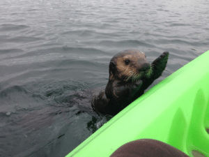 Cute, Tumblr, and Blog: unclefather:   badrapper:  awwww-cute:  Went kayaking with my girlfriend and we made the cutest friend!  excuse me WHY are his hands up i cant handle this  pick him up