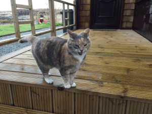 unclefather:  cutekittensarefun: The host at our Airbnb has the most talkative cat.  That is the host  : unclefather:  cutekittensarefun: The host at our Airbnb has the most talkative cat.  That is the host