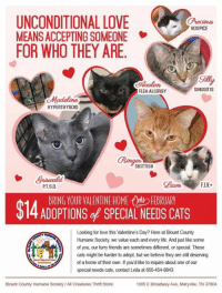 71e1bdb38850ab ... Ualon FLEA ALLERGY SINUSITIS Madeline HYPERTHYROID SKITTISH Lam FIV  PTSD BRING YOUR VALENTINE HOME OFEBRUARY  14 ADOPTIONS of SPECIAL NEEDS  CATS Looking ...