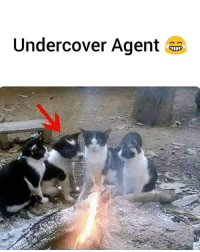 Day, They, and Agent: Undercover Agent a Day 183 : They still clean me everyday without noticing..