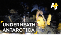 Ever wonder what's beneath the ice in Antarctica? It's a lot more colorful than you think.: UNDERNEATH  ANTARCTICA Ever wonder what's beneath the ice in Antarctica? It's a lot more colorful than you think.