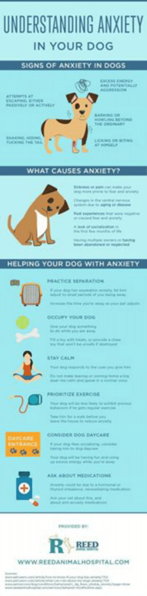 Dog With Anxiety