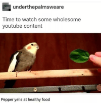 Food, youtube.com, and Time: underthepalmsweare  Time to watch some wholesome  youtube content  Pepper yells at healthy food