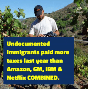 Amazon, Netflix, and Taxes: Undocumented  Immigrants paid more  taxes last year than  Amazon, GM, IBM&  Netflix COMBINED