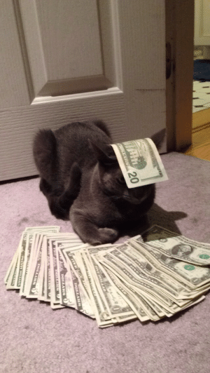 uncomfortablecucumber:  This is money cat. He only appears every 1,383,986,917,198,001 posts. If you repost this in 30 seconds he will bring u good wealth and fortune. : UNE  RCKAR 20  ONE OLAARC  www .  DOLLARS  DOLLARA  TOLLARN uncomfortablecucumber:  This is money cat. He only appears every 1,383,986,917,198,001 posts. If you repost this in 30 seconds he will bring u good wealth and fortune.