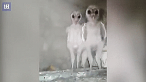 Tumblr, Aliens, and Blog: unexplained-events:Baby owls look like tiny little aliens