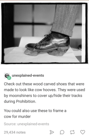 I always knew those poor cows were framed: unexplained-events  Check out these wood carved shoes that were  made to look like cow hooves. They were used  by moonshiners to cover up/hide their tracks  during Prohibition  You could also use these to frame a  cow for murder  Source: unexplained-events  29,434 notes I always knew those poor cows were framed