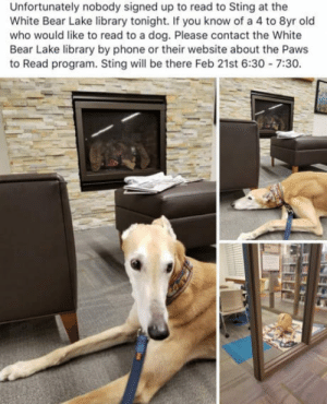 Phone, Bear, and Library: Unfortunately nobody signed up to read to Sting at the  White Bear Lake library tonight. If you know of a 4 to 8yr old  who would like to read to a dog. Please contact the White  Bear Lake library by phone or their website about the Paws  to Read program. Sting will be there Feb 21st 6:30 7:30 Long boi heckin sad