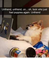😂😂😂 | More 👉 @miinute: Unfriend, unfriend, un  oh, look who just  had puppies again. Unfriend 😂😂😂 | More 👉 @miinute