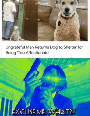 affectionate: Ungrateful Man Returns Dog to Shelter for  Being 'Too Affectionate'  EXCUSE ME. WHAT?!