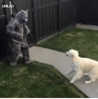 Dad, Dank, and Dogs: UNI This dog's reaction to his Dad dressed as a werewolf is everything 😂😂