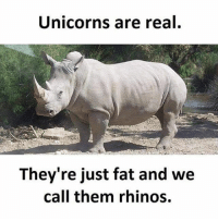 Memes, Fat, and 🤖: Unicorns are real  They're just fat and we  call them rhinos.