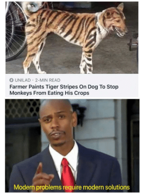 Farmer with a pro gamer move via /r/memes https://ift.tt/33AAeY4: UNILAD 2-MIN READ  Farmer Paints Tiger Stripes On Dog To Stop  Monkeys From Eating His Crops  Modern problems require modern solutions Farmer with a pro gamer move via /r/memes https://ift.tt/33AAeY4