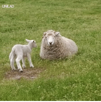 Dank, Accurate Representation, and 🤖: UNILAD Accurate representation of what it's like being a parent 😂🐑