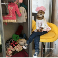 This cat is sick of cleaning up after her kids 😂😂  Angel Bengal: UNILAD  AngelBengal This cat is sick of cleaning up after her kids 😂😂  Angel Bengal