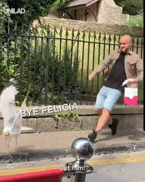 """Been watching this seagull terrorise people all morning!"" This unsuspecting man and his sausage roll were easy prey... 😂👀: UNILAD  BYE FELICIA  Get him! ""Been watching this seagull terrorise people all morning!"" This unsuspecting man and his sausage roll were easy prey... 😂👀"