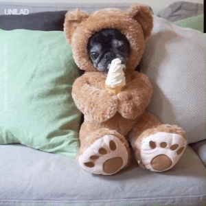 Dank, Ice Cream, and Today: UNILAD  CHOCO BLACKPUG/VIRALHOG This pug in a teddy outfit eating an ice cream cone is everything I needed today! 😍🐶