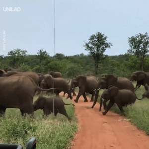 Dank, Elephant, and Safari: UNILAD  ci These safari goers had a close call after they got caught in the middle of an elephant stampede 😱🐘