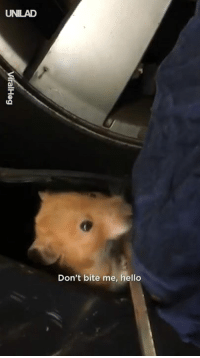 "Dank, Hello, and 🤖: UNILAD  Don't bite me, hello ""I heard scratching noises inside of my car, so I drove to the garage... I couldn't believe what they found"" 😲😂😂  ViralHog"