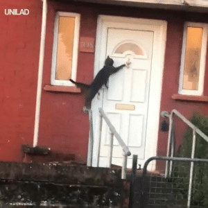 """Dank, 🤖, and Cat: UNILAD """"Either I'm seeing things or this cat just knocked on the door?!"""" 😂😂"""