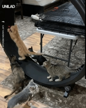 How to exercise a litter of kittens 😂😂: UNILAD  f CAT HAVEN RESCUE INC How to exercise a litter of kittens 😂😂