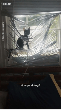 Dank, 🤖, and How: UNILAD  How ya doing? This little troublemaker loves destroying blinds 😂😂