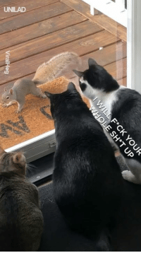 Cats, Dank, and Life: UNILAD Just a squirrel having the time of his life trolling three cats! 😂😂  ViralHog