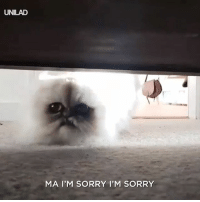 Dank, Sorry, and Weird: UNILAD  MA I'M SORRY I'M SORRY The weird cat is back and scarier than ever 😂😂