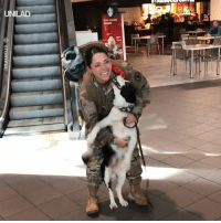 Dank, 🤖, and Her: UNILAD  MOMENT After her deployment, this soldier wondered whether her dog would even remember her... It's safe to say she had nothing to worry about ❤️️