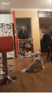 """Dank, 🤖, and Challenge: UNILAD """"My grandad's attempt at the What The Fluff challenge went hilariously well"""" 😂😭"""