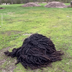 This pile of dirt isn't what it seems 😱🐶: UNILAD  NEWSFLARE This pile of dirt isn't what it seems 😱🐶