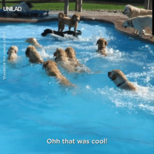These pups are having a blast at their doggy pool party! 🐶🌊: UNILAD  Ohh that was cool!  LUCKY PUPPY VIA STORYFUL These pups are having a blast at their doggy pool party! 🐶🌊