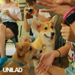 Stop EVERYTHING you're doing and go to the corgi cafe 😍😩: UNILAD Stop EVERYTHING you're doing and go to the corgi cafe 😍😩