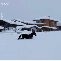 These horses playing in the snow will surely brighten your day 😍🐴: UNILAD These horses playing in the snow will surely brighten your day 😍🐴