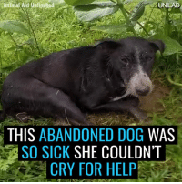 Dank, Asos, and India: UNILAD  THIS ABANDONED DOG  WAS  ASO SICK  SHE COULDN'T  CRY FOR HELP This dog was abandoned in horrific weather and was too sick to cry for help. Her recovery is incredible 🙌  by Animal Aid Unlimited, India