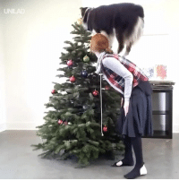 Christmas, Dank, and Spirit: UNILAD This is EXACTLY what I need to get me in the Christmas spirit 😍