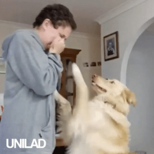 This service dog Marley is specifically trained to jump up at Hayley whenever she needs him! 🐶😍: UNILAD This service dog Marley is specifically trained to jump up at Hayley whenever she needs him! 🐶😍