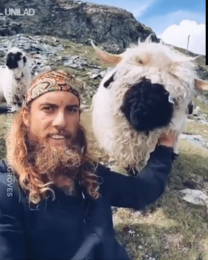 """I just became friends with the fluffiest sheep ever..."" 🐑😍: UNILAD  TORYTRENDER/JACKSON.GROVES ""I just became friends with the fluffiest sheep ever..."" 🐑😍"