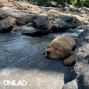 """""""We took my pup on his first walk and he loved the water and rocks so much he fell asleep"""" 😍: UNILAD """"We took my pup on his first walk and he loved the water and rocks so much he fell asleep"""" 😍"""