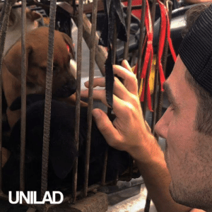 With minutes away from slaughter, this guy rescued as many dogs as he could from the infamous Yulin Dog Meat Festival! 🙌: UNILAD With minutes away from slaughter, this guy rescued as many dogs as he could from the infamous Yulin Dog Meat Festival! 🙌
