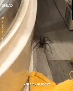 Always double check before you go to the bathroom! 🤢🕷: UNILAD  You stay in there!  LEEXNNE/STORYTREND Always double check before you go to the bathroom! 🤢🕷