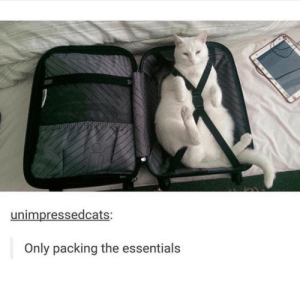 Essentials, Packing, and The: unimpressedcats:  Only packing the essentials