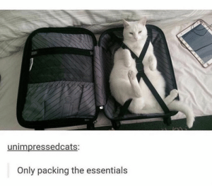 https://t.co/vyAkciyw9W: unimpressedcats:  Only packing the essentials https://t.co/vyAkciyw9W