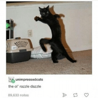 Cats guys. Just cats: unimpressedcats  the ol' razzle dazzle  89,633 notes Cats guys. Just cats